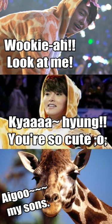 Ryeowook, Donghae, and a giraffe... This is possibly the funniest and cutest thing I've ever seen XD