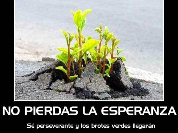 MENSAJE DIARIO  Agosto 13: (Tao #43) PERSEVERANCIA: Cuando parece que no nos está pasando nada alentador, es importante recordar tal perseverancia. El trabajo puede ser una pesadez, el mantener una casa puede ser rutinario, y puede que pensemos que nuestras metas estén bastante distantes. Pero debemos perseverar y prepararnos de todos modos. Eso producirá un paso firme hacia nuestras metas, y mantendrá a flote nuestra fe en los tiempos agitados y amenazantes.@puntoenergetico8