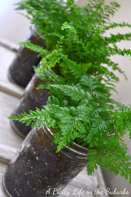 indoor ferns... select potted plants and ferns as centerpieces and decor, that you may use later on in your yard or interior decor. That way the couple will have a memory garden of their special day.