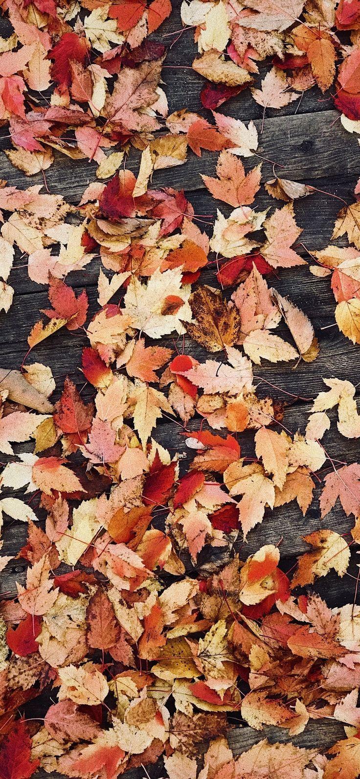 Iphone Xr Wallpaper Autumn ipcwallpapers Wallpaper