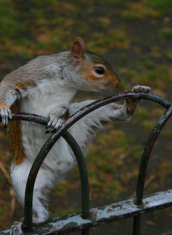 """(""""The way a squirrel pole dances....too funny!!"""")  ...eh, I guess I do need a pedicure before I hit the deck tonight."""