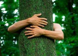 Energie stromů vám pomůže opět najít harmonii a rovnováhu.