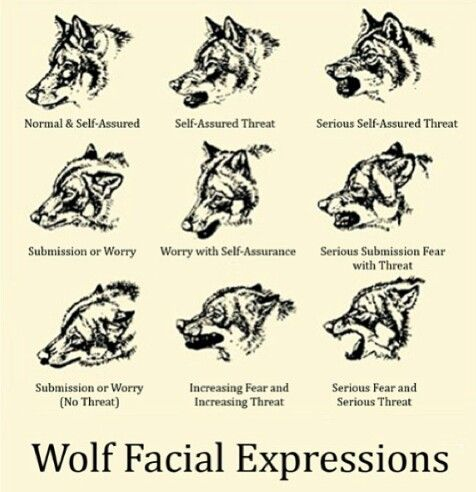 Wolf expressions. Useful for writers.