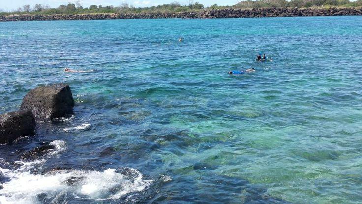 Snorkelling in Coolangatta