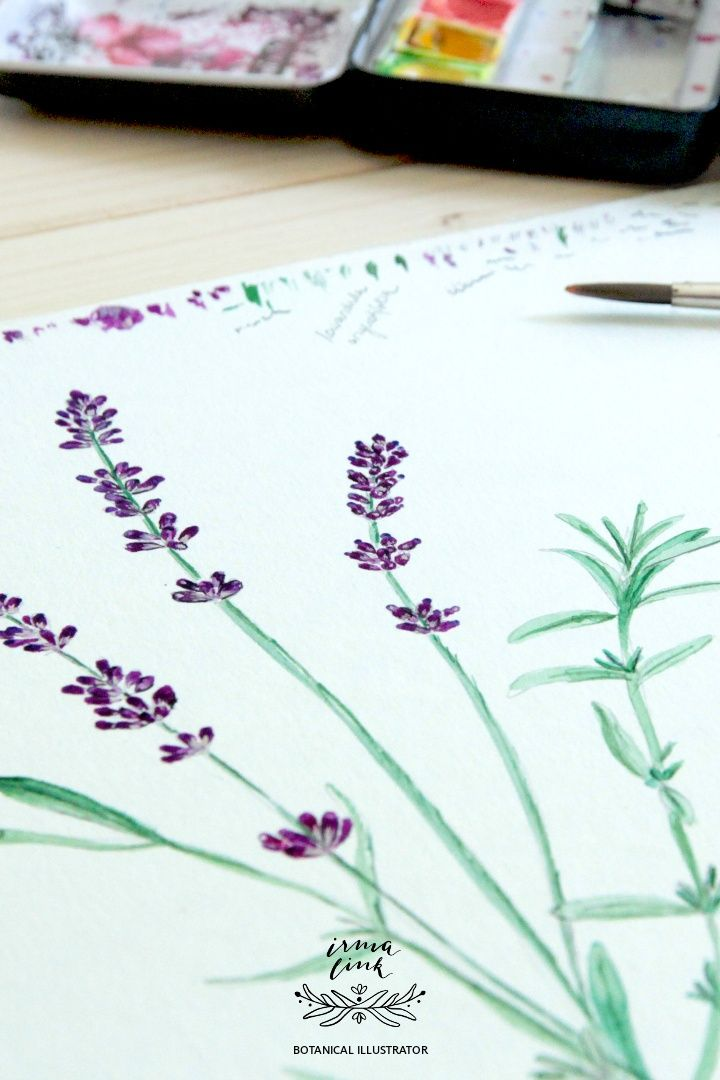 Wildpflanzen Aquarell Tutorial Lavendel Lavendel