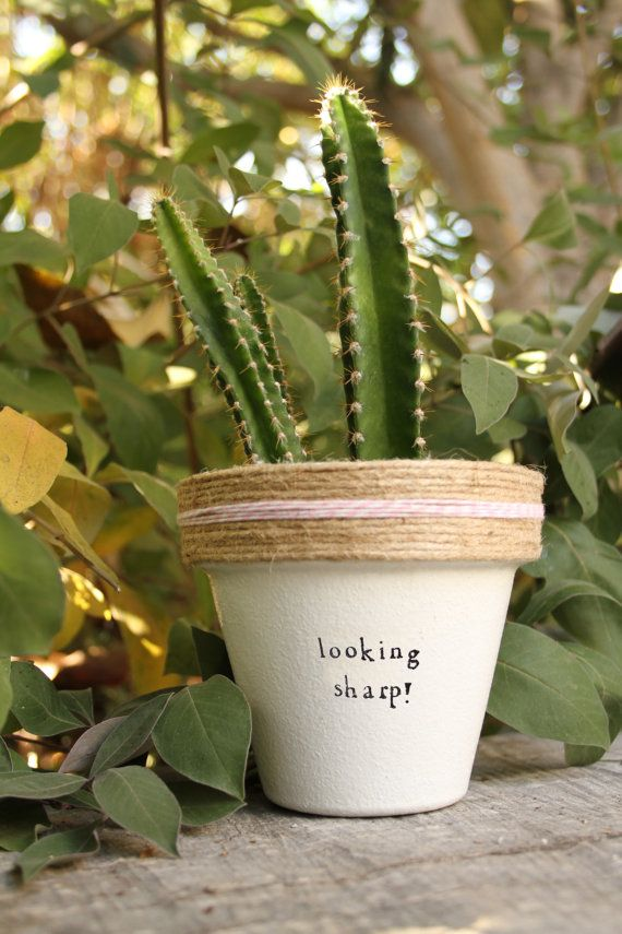 Looking Sharp by PlantPuns on Etsy