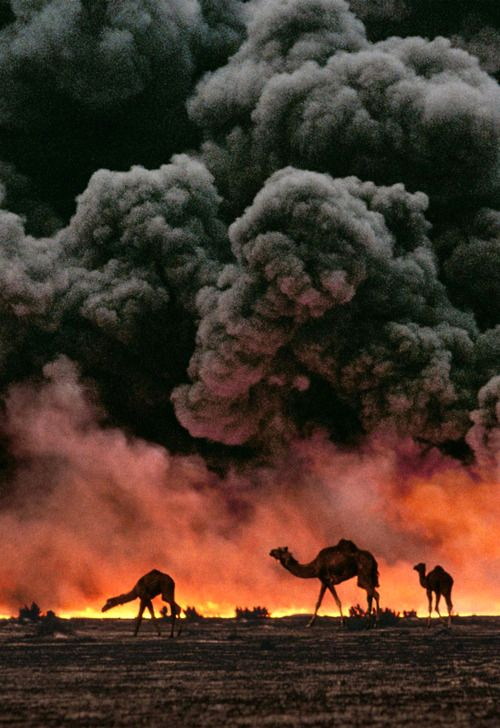 Amazing photo..  (camels walking along the road while the smoke amd fire is from the oil wells set on fire by Iraq during the war, I think this is the first Iraq war)