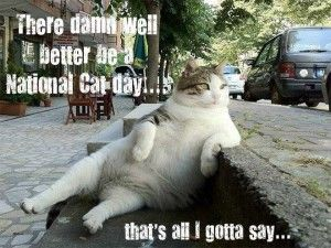 d190aaafe6ee4d83605312fc023c34df national cat day faut 102 best 2015 cat lovers hop memes, photos, and funnies images on