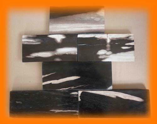 Petrified Wood Tile | Fossil Tiles