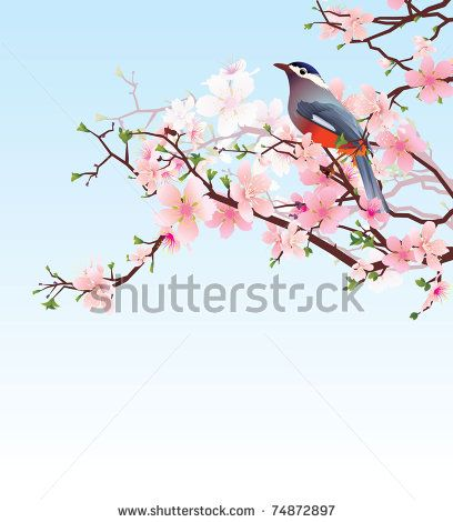 Pink Cherry Blossom Stock Photos, Pink Cherry Blossom Stock Photography, Pink Cherry Blossom Stock Images : Shutterstock.com