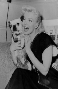 Marilyn and Frenchie...Lucky dog!