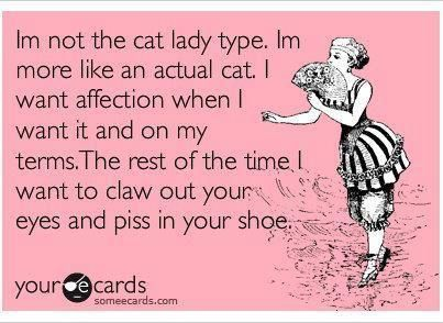 There are days I easily think I could be a cat: Crazy Cats, My Life, Accur, Ahahahhha, Actual Cats, Totally Me, Cats Lady, True Stories, Haha So True