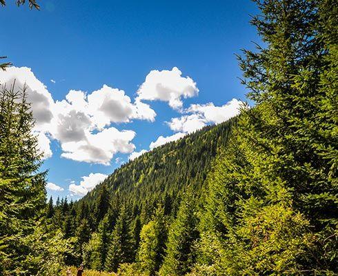 In Romania exista 13 Parcuri Nationale, fiecare dintre ele gazduind un numar mai mic sau mai mare de Rezervatii Naturale. Am inceput prin a explica.