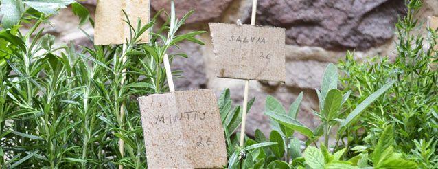 Leivinlaudalla: Salvialeipä