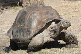 A souvenir shop that funds Galapagos wildlife protection has been forced to close due to protests from local business owners. Without this funding, giant tortoises and other animals are threatened. Tell the government to reopen the store in order to preserve the Galapagos Islands' unique wildlife.