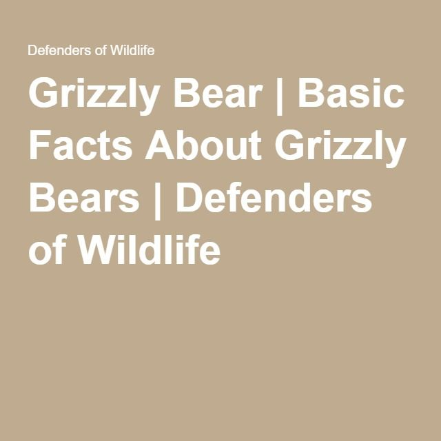 Grizzly Bear | Basic Facts About Grizzly Bears | Defenders of Wildlife