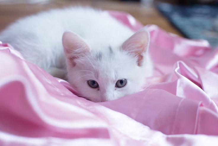 kitten preparing to attack with love - kitten preparing to attack with love
