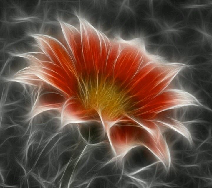 Fractal Flower+