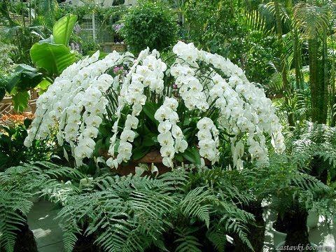 Мои орхидеи ( The orchids ) - YouTube