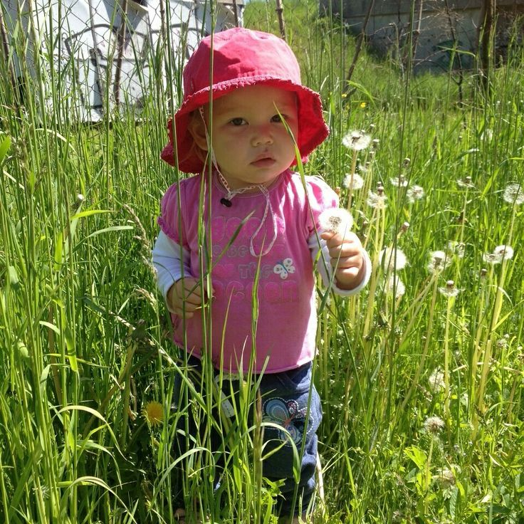 Bubba checking out the dandelions in nanny's garden