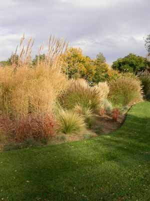 Ornamental grasses and shrubs together. Stunning!