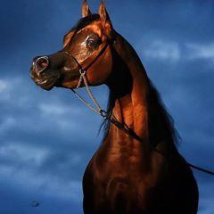 See Him at All Nations Cup Aachen #خيل #خيول #الخيل #الخيول #حصان #مهره #مهر #فرس #اصايل #الاصايل #الرشيم #بنات_الريح #مصوري_الخيل #horse #horses #stallion #mare #colt #filly #cavalli #klacz #ogier #semental #yegua #konie #haras #caballos #paarden #pferde #cavalo