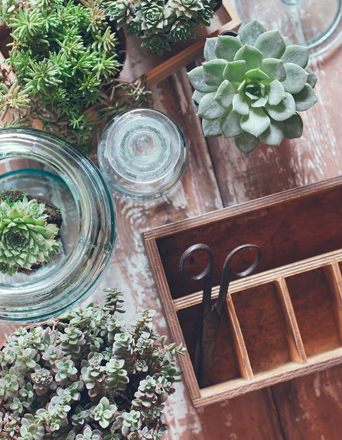 Dicas para plantar suculentas