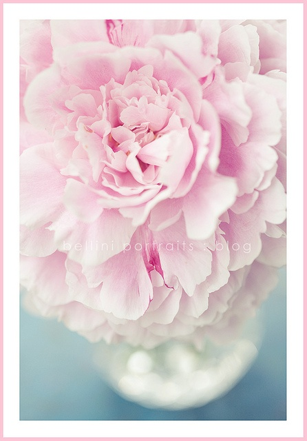 Peonies are my favourite flower of all. Whenever I see one, it reminds me of the day my daughter was born.