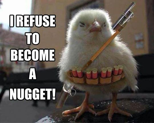This little chick is leading the vegan revolution!