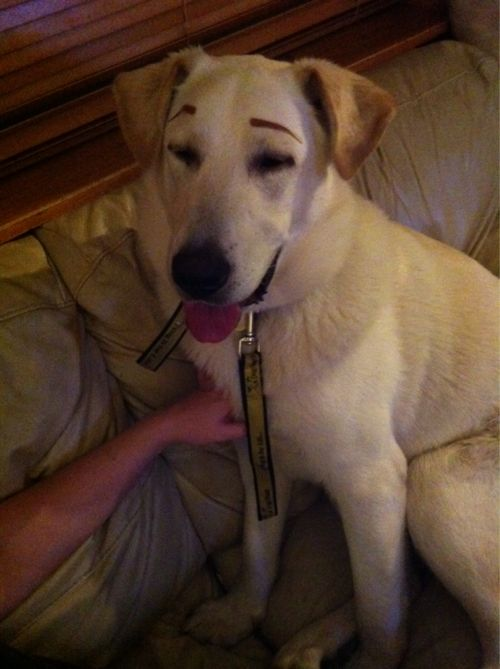 And this is why dogs don't have eyebrows:)