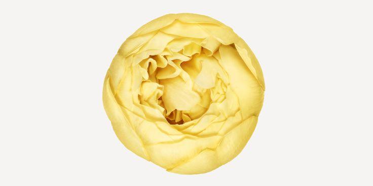 Andrew Zuckerman's Extraordinary Portraits of Flowers   Brain Pickings