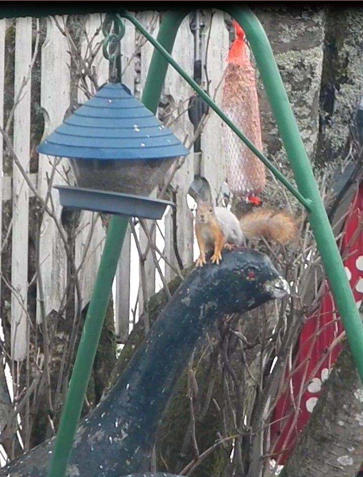 Orava. Kuva 1. 17.04.2015.
