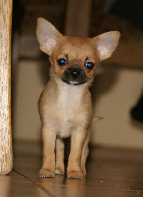 Mimi as a puppy
