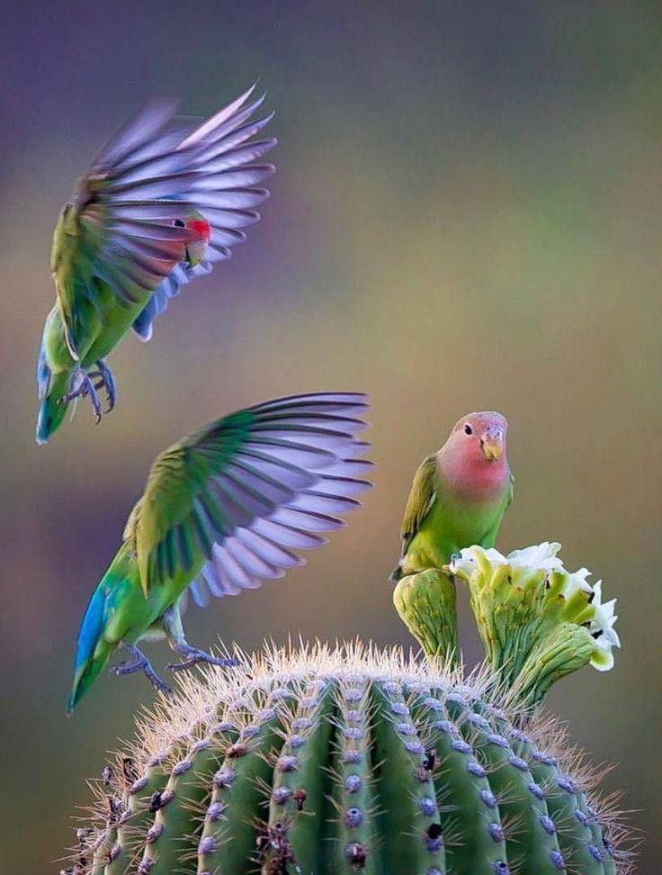 Pin van gea oude lansink op nature | Prachtige vogels, Vogels, Kleurrijke vogels