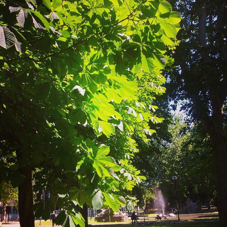 Una mattina d'estate, Parco della Montagnola Bologna