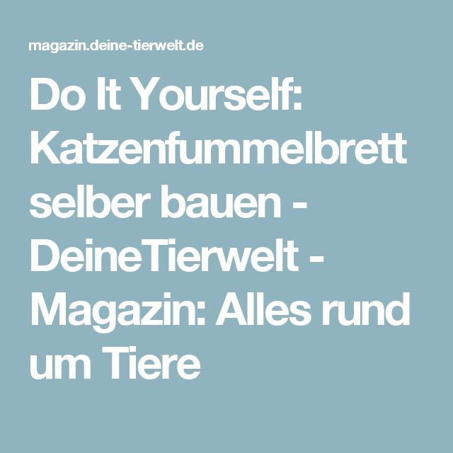 Do It Yourself: Katzenfummelbrett selber bauen - DeineTierwelt - Magazin: Alles rund um Tiere