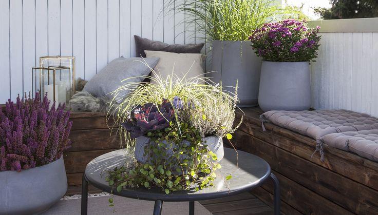Lag en koselig høstgruppe som pynter opp inngangspartiet eller terrassen helt til vinteren kommer. Det er enklere enn du tror. Vi viser deg hvordan.