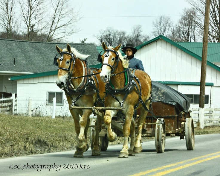 180 best Amish Wagons images on Pinterest | Amish country, Amish ...