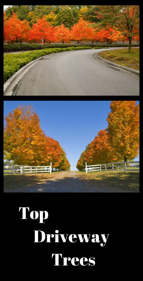 Best Trees For Driveways Trees Front Yards And The O Jays 400 x 300