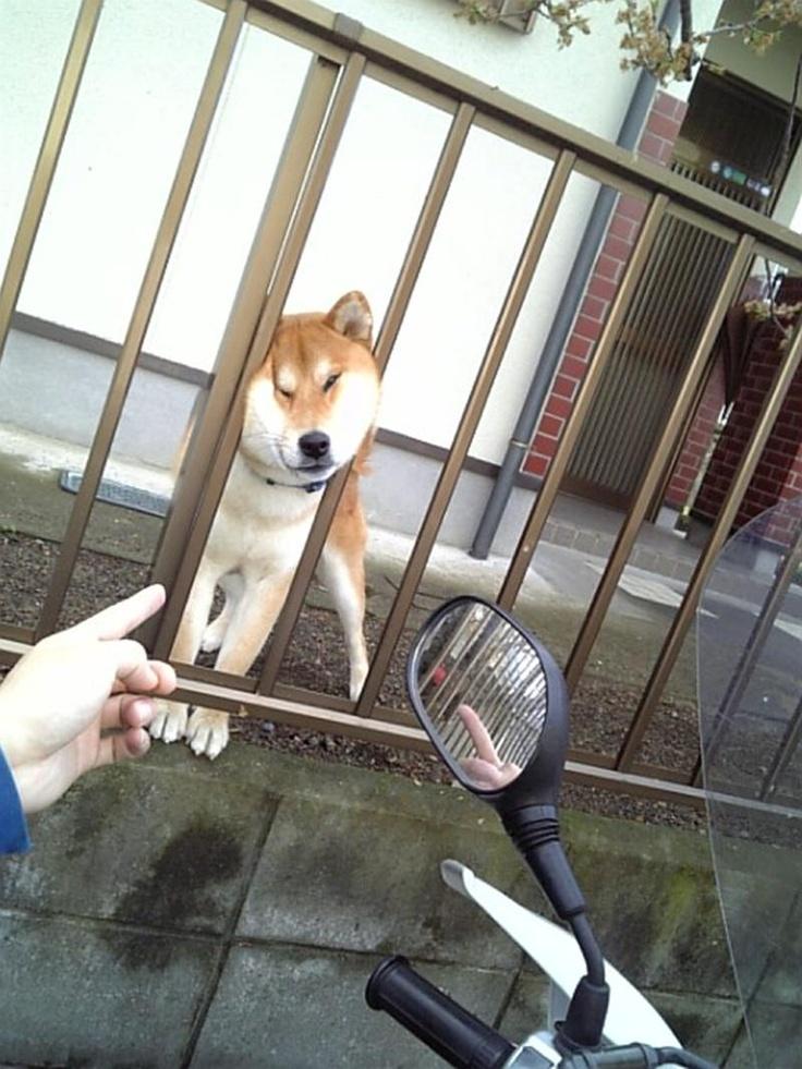 犬《ふっ、ふははは ここでも挟まっちまった》