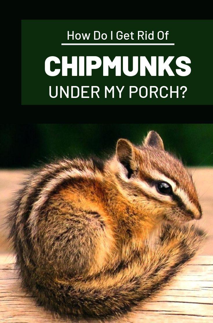 How do i get rid of chipmunks under my porch