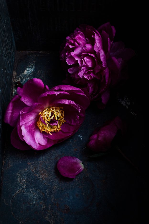 ❈ Fleurs Foncées ❈ dark art photography flowers & botanical prints - peony