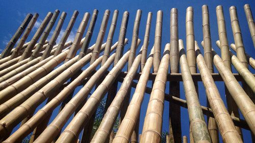Drying Bamboo Poles