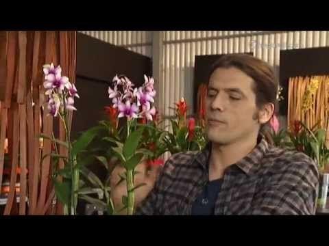 ▶ Cuidados básicos de las orquídeas - YouTube