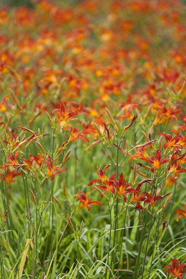 lily,Seoul,KOREA photo by e.s lee