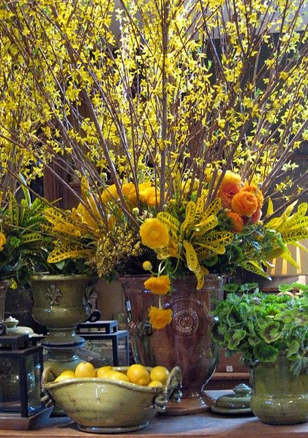 25 best images about is forsythia time on