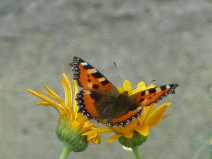 Les insectes et amis du jardin une collection d 39 id es - La boutique du jardinage ...