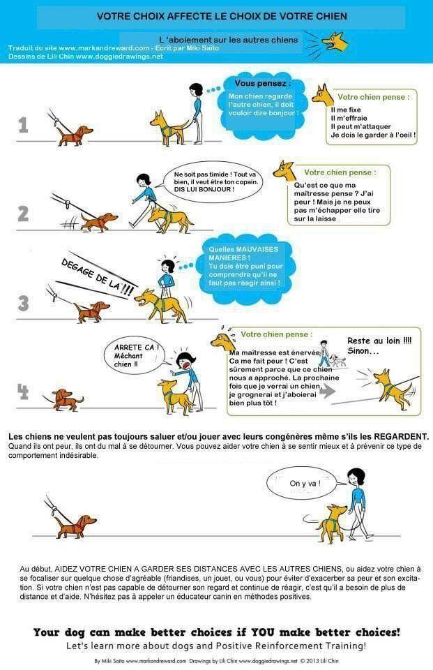 Votre chien aboie lorsqu'il voit un autre chien? | Éducation canine des Quatre pattes