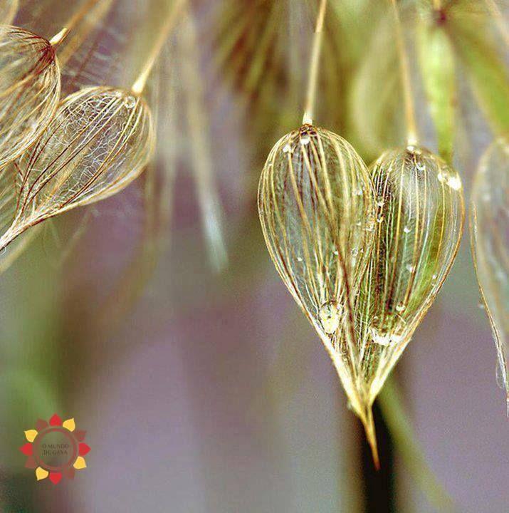 Parece milagre, mas as sementes de cura começam a florescer nos mesmos jardins onde parecia que nenhuma outra flor brotaria.  A alma é sábia: enquanto achamos que só existe dor, ela trabalha, em silêncio, para tecer o momento novo. E ele chega.  Ana Jácomo