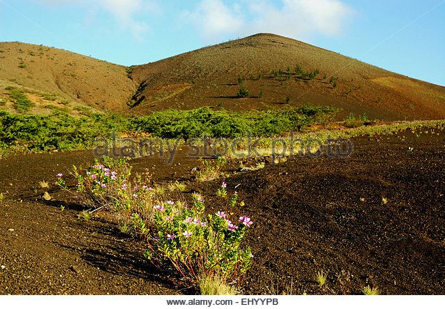 Ascension, Ascension Island, volcano, lava, sand, plants, pioneer plants,